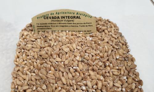 Barley accelerates metabolism