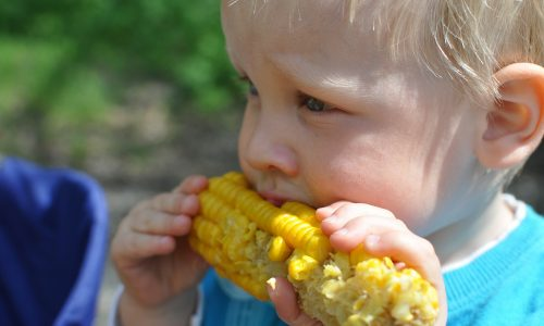 Corn strengthens the digestive and immune systems